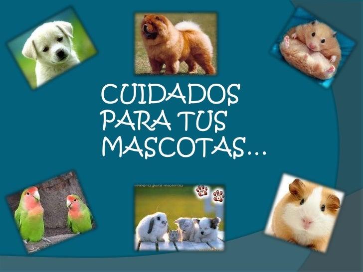Cuidados para tus mascotas for Cuidados de la vinca