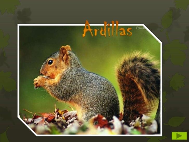 La ardilla es un mamífero roedorMide entre 35 y 45 cm de longitud,de las que casi la mitad pertenecena la cola. En las ext...