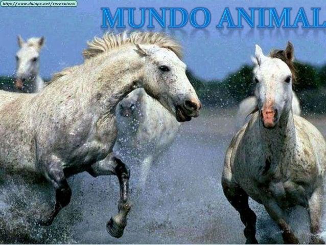 ANIMALES TERRESTRES                               ANIMALES ACUÁTICOS Los animales. terrestres pueden vivir en        Pue...