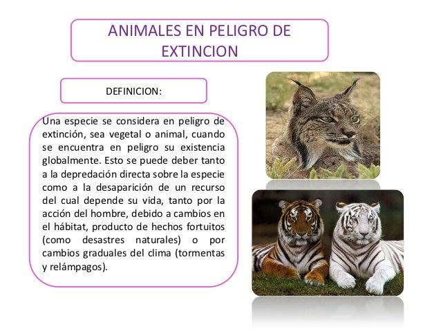 ANIMALES EN PELIGRO DE                   EXTINCION              DEFINICION:Una especie se considera en peligro deextinción...