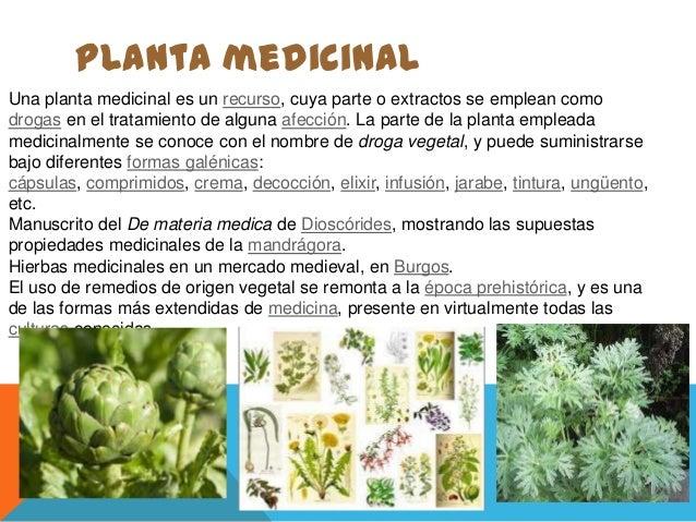 Clases de plantas for Todas las plantas ornamentales