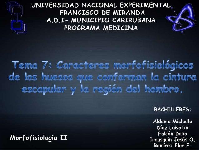UNIVERSIDAD NACIONAL EXPERIMENTAL             FRANCISCO DE MIRANDA         A.D.I- MUNICIPIO CARIRUBANA              PROGRA...