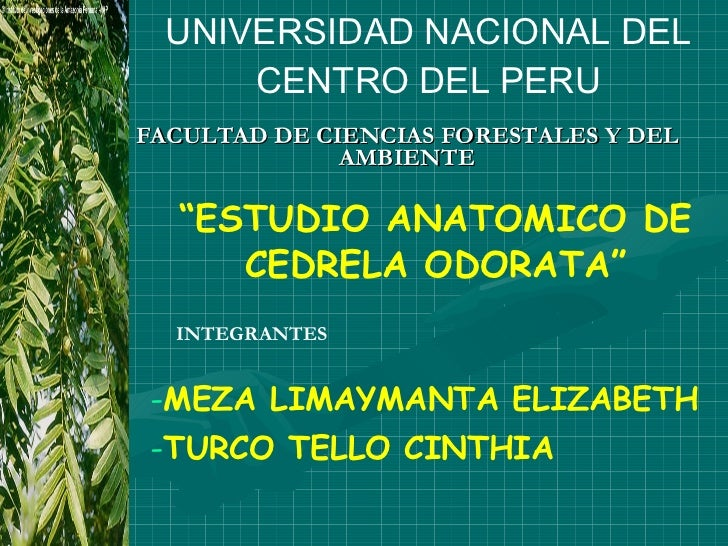 """FACULTAD DE CIENCIAS FORESTALES Y DEL AMBIENTE UNIVERSIDAD NACIONAL DEL CENTRO DEL PERU """" ESTUDIO ANATOMICO DE CEDRELA ODO..."""