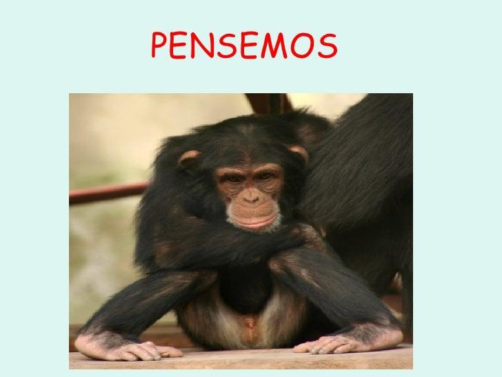 PENSEMOS