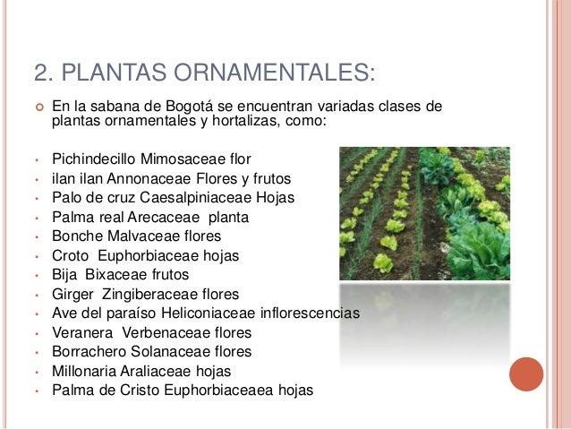 Agricultura urbana for Plantas ornamentales croto