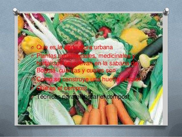 O Que es la agricultura urbanaO Plantas ornaméntales, medicinales y  hortalizas se cultivan en la sabana de  Bogotá cuanta...
