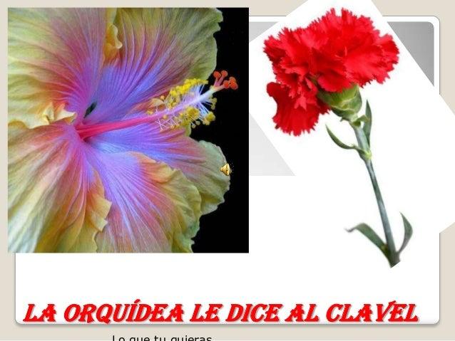 La orquídea le dice al clavel