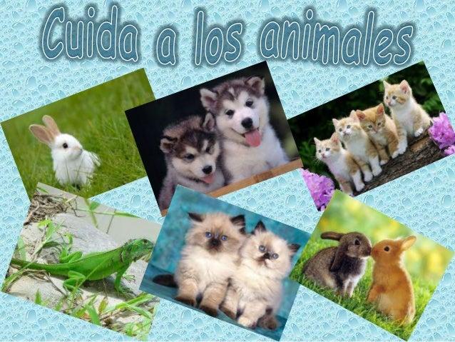 Cuida a los animales. Kathia Ramirez