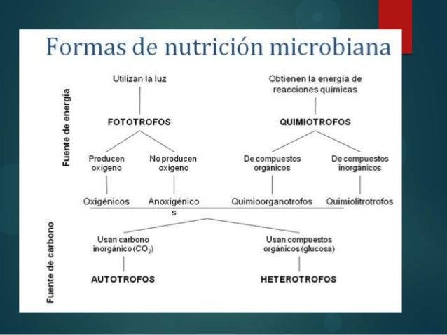 Fisiologia Y Metabolismo Microbiano