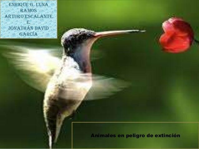 Enrique G. Luna Ramos Arturo Escalante E. Jonathán David García  Animales en peligro de extinción