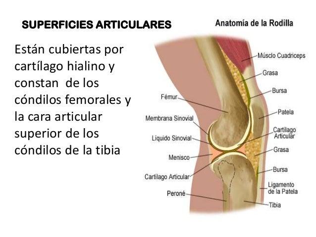 Articulaciones Articulaciones Rodilla Rodilla De La Articulaciones La De Lq3RA54j