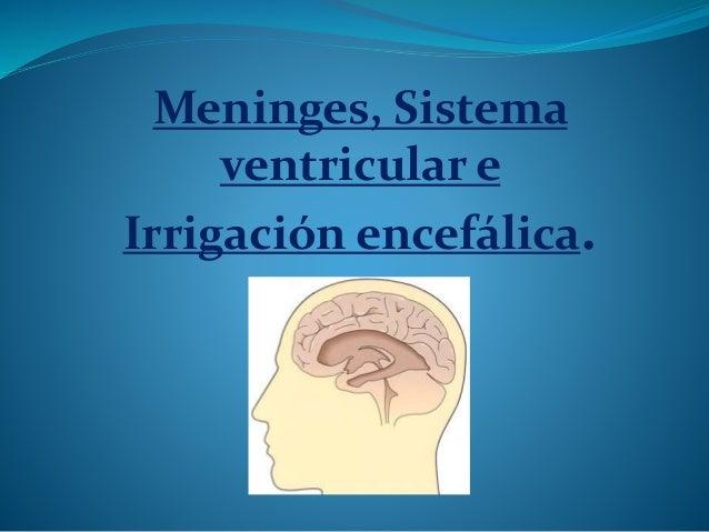 Meninges, Sistema ventricular e Irrigación encefálica.