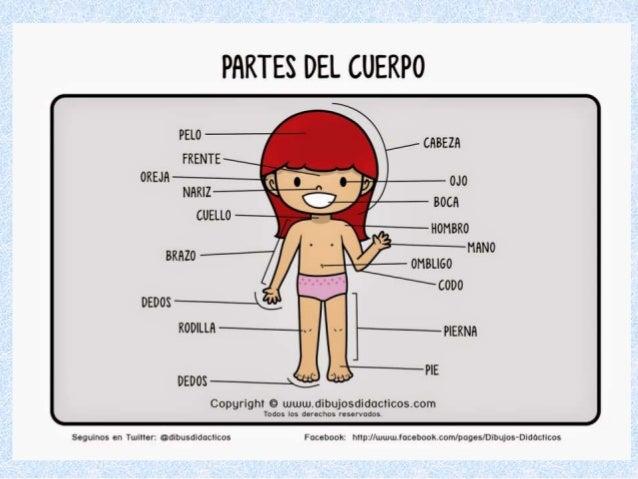 Partes internas del cuerpo humano para niños