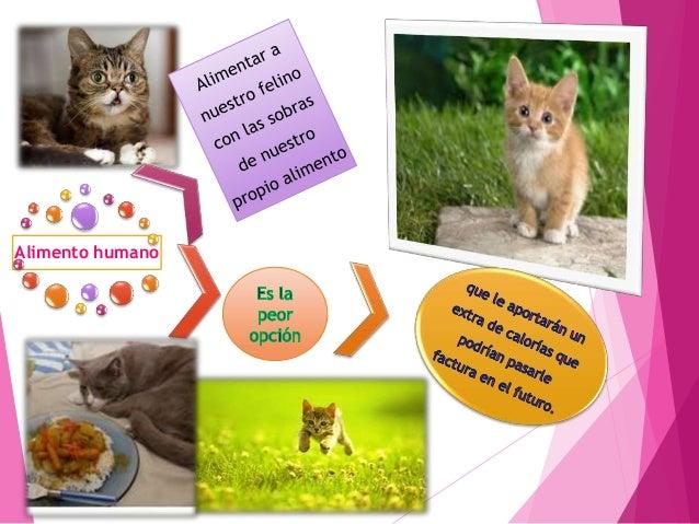 Aparición de las razas La raza de gatos fue inventada por El suco LINNEO Porque el distinguió 4 razas de felinos Catus Dom...