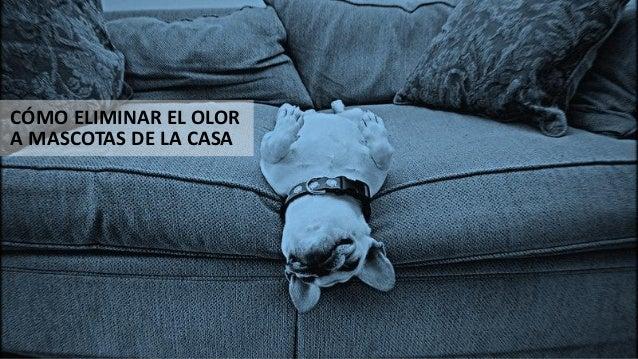 C mo eliminar los olores de mascotas en la casa - Eliminar sarro en casa ...