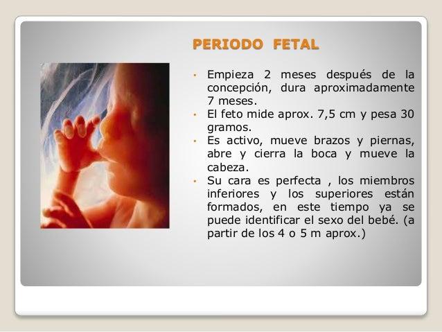 Psicolog a del desarrollo - 15 semanas de embarazo cuantos meses son ...