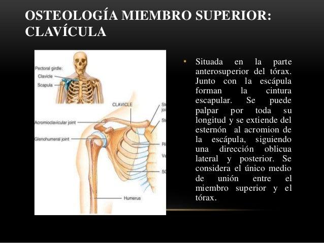 Osteolog A De La Clav Cula Y Om Plato