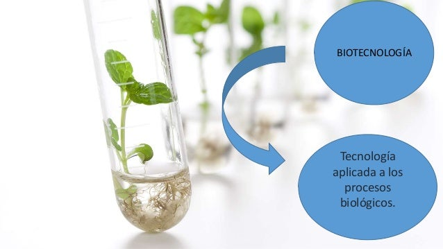 BIOTECNOLOGÍA Tecnología aplicada a los procesos biológicos.