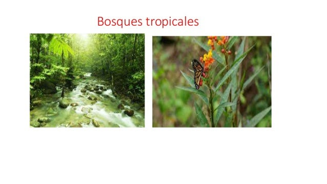 Presentación Fauna y Flora