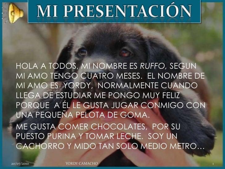MIPRESENTACIÓN<br />HOLA A TODOS, MI NOMBRE ES RUFFO, SEGUN MI AMO TENGO CUATRO MESES.  EL NOMBRE DE MI AMO ES  YORDY,  NO...