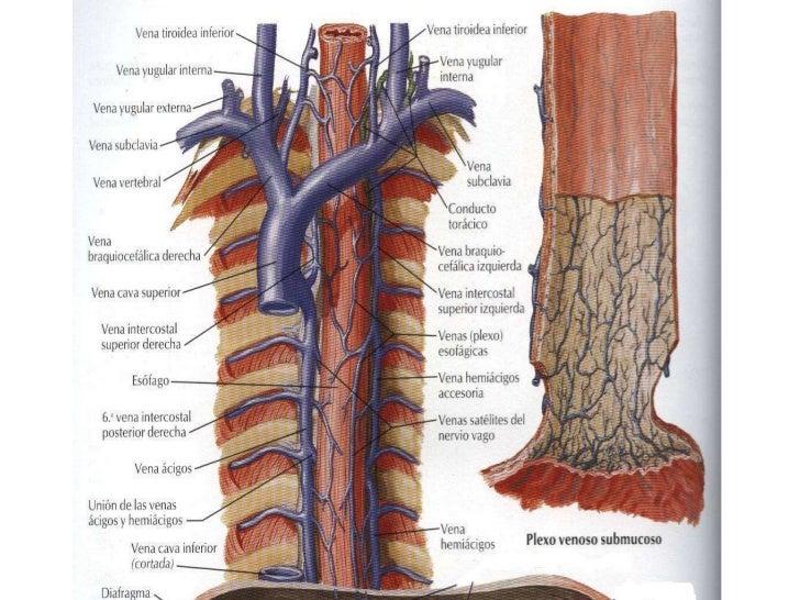 Las trombosis y emboliya mezenterialnyh de los vasos la etiología y la patogenía