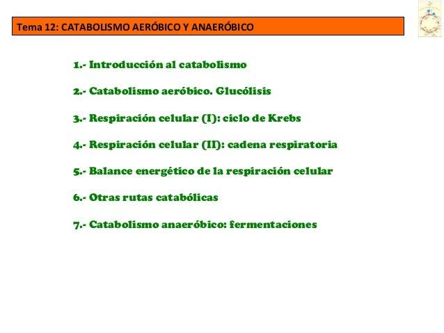 Tema 12: CATABOLISMO AERÓBICO Y ANAERÓBICO 1.- Introducción al catabolismo 2.- Catabolismo aeróbico. Glucólisis 3.- Respir...