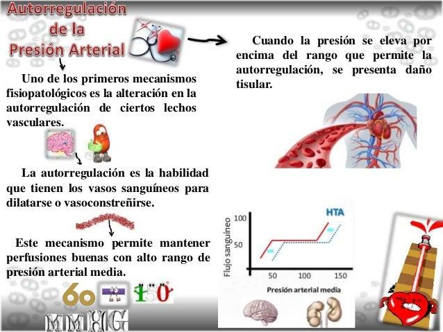Autorregulación de la Tensión Arterial