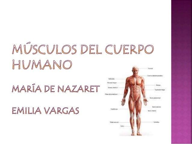 Son los motores del movimiento un del musculo es un haz de fibras