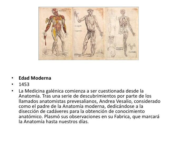 Lujo Anatomía Humana Temprana Patrón - Anatomía de Las Imágenesdel ...