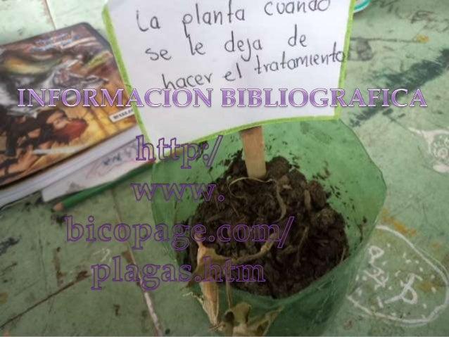 1. Conseguir las plantas medicinales y   aromáticas con las cuales se hace el             abono natural.   2. Construir do...
