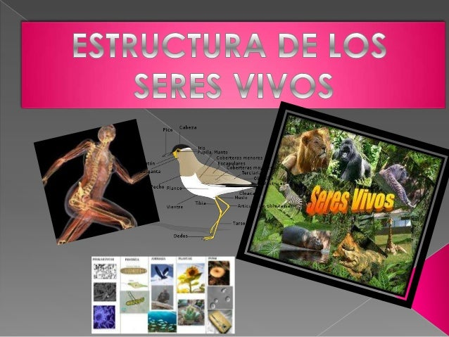 Esli jazmin presentaci n1power point estructura de lo seres vivos - Estructuras libros vivos ...