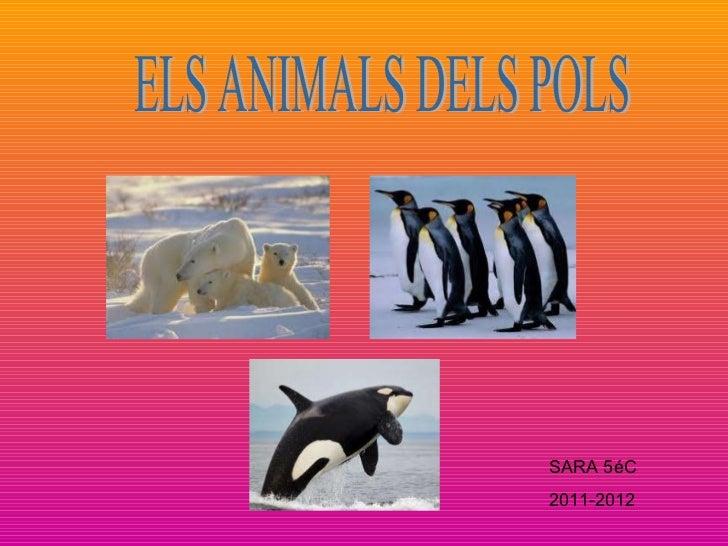 ELS ANIMALS DELS POLS SARA 5éC 2011-2012