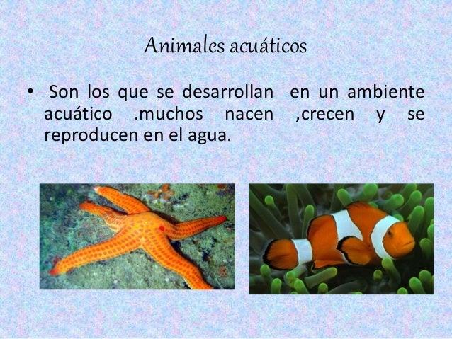 resumen plantas y animales acuaticos