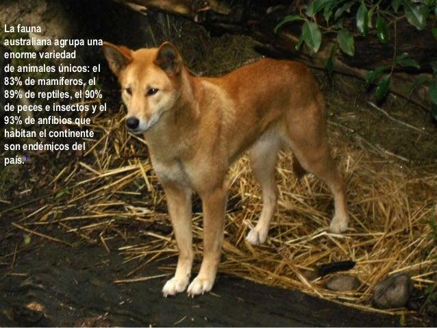 La fauna La fauna de Asia esEn otras épocas, Europa fue el hogar de una tan diversa como los climas, La fauna enagrupa una...
