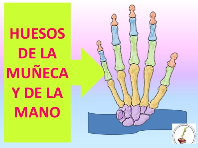 HUESOS DE LA MUÑECA Y MANO