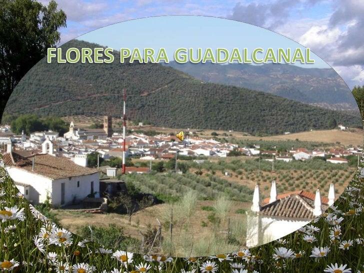 FLORES PARA GUADALCANAL<br />