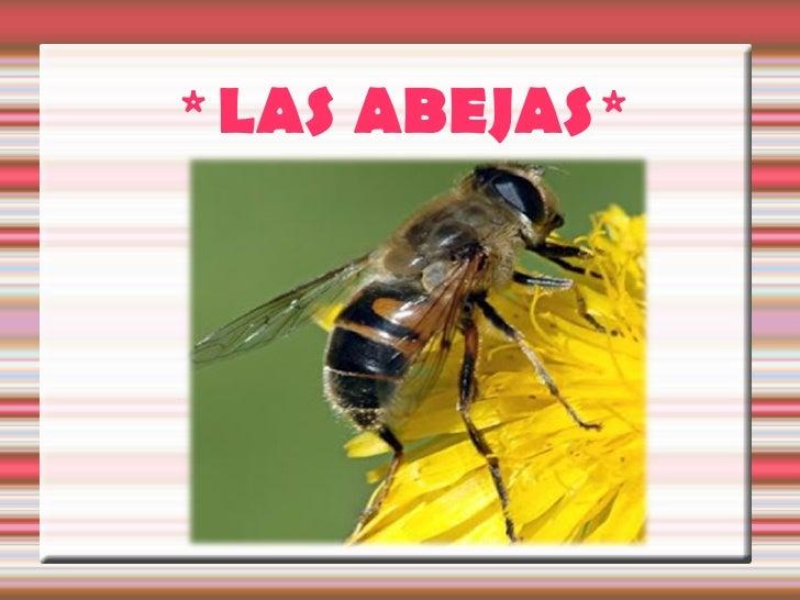 * LAS ABEJAS*