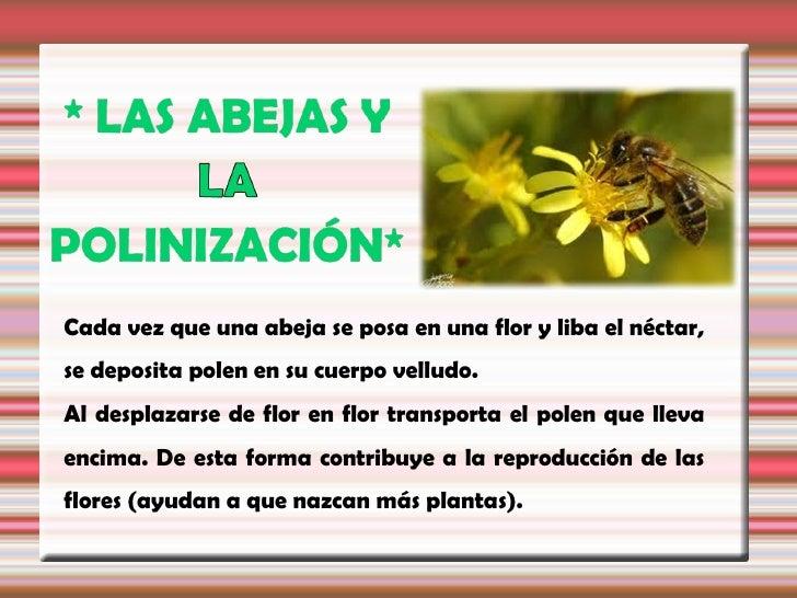 Se calcula que la tercera parte de los alimentoshumanos son polinizados      por insectos,fundamentalmente por         ell...