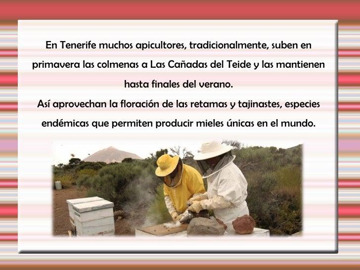 Presentación abejas comprimida