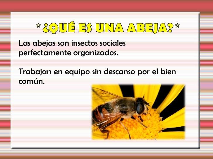 Las abejas son insectos socialesperfectamente organizados.Trabajan en equipo sin descanso por el biencomún.