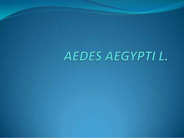 Los mosquitos Orden Diptera, Familia Culicidae; Son artrópodos hematófagos Lo mas importante que se alimentan del hombre, ...