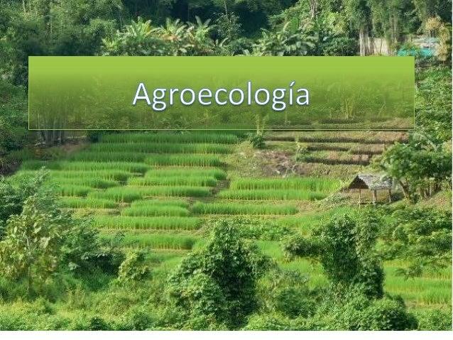 Lo que se dice de la Agroecología: La agroecología es una agricultura de pobreza. Con métodos agroecológicos se obtienen b...