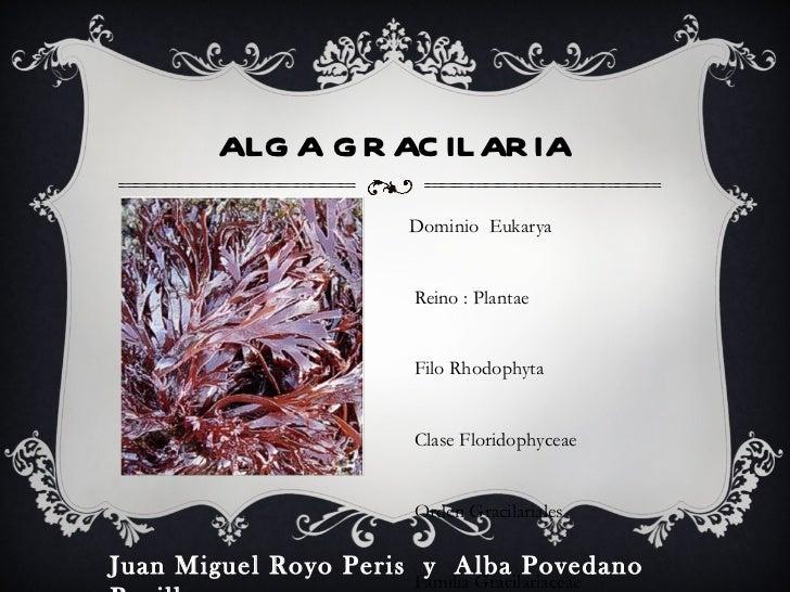 <ul><li>-Dominio  Eukarya </li></ul><ul><li>- Reino : Plantae </li></ul><ul><li>- Filo Rhodophyta </li></ul><ul><li>- Clas...