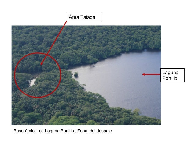 Área Talada Laguna Portillo Panorámica de Laguna Portillo , Zona del despale