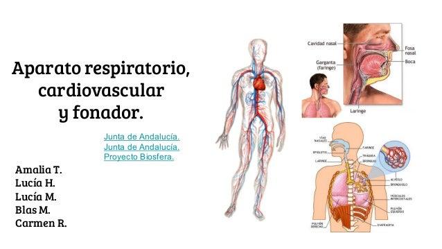 Presentación anatomía.