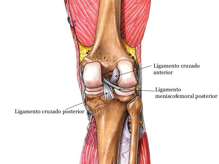 Anatomia radiològica