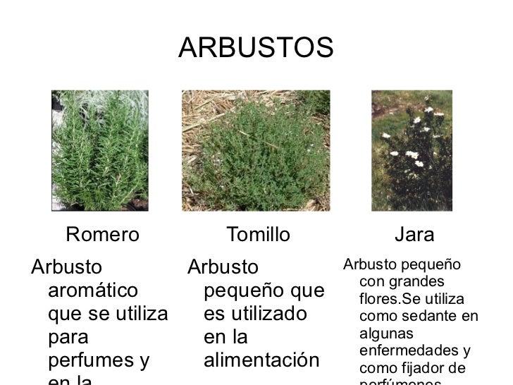 Presentaci n animales y plantas del entorno - Lista nombre arbustos ...