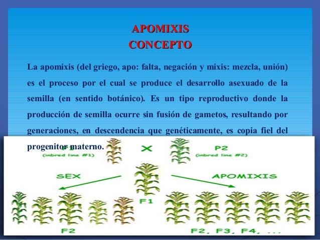 Apomixis reproduccion asexual en