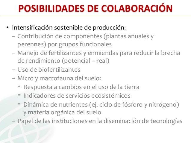 POSIBILIDADES DE COLABORACIÓN:• Restauración de agro-ecosistemas degradados:‒ Servicios ecosistémicos: secuestro de carbon...