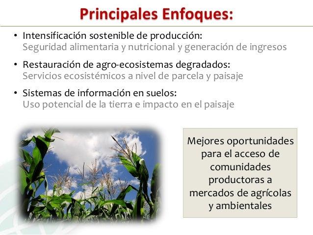 INTENSIFICACIÓN SOSTENIBLEProducción de alimentosen la actualidadDesafío: aumento de productividaddentro de límites ecológ...
